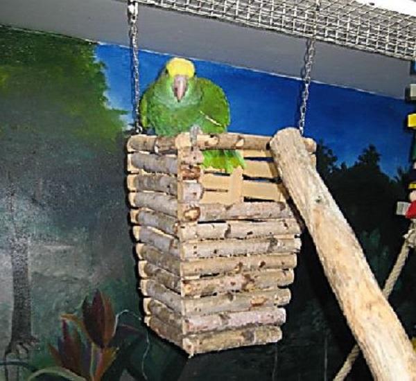Amazone in Turmschaukel