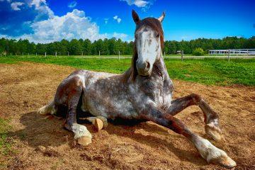 Pferde richtig halten und Ernähren