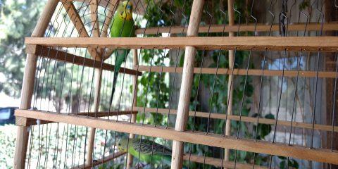 Wellensittich Vogelkäfig