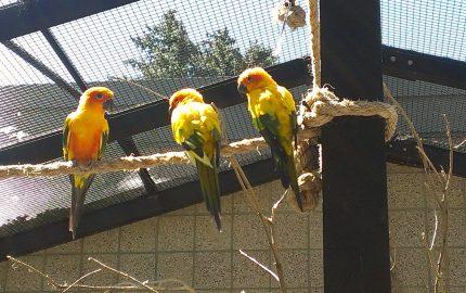 Vögel Voliere